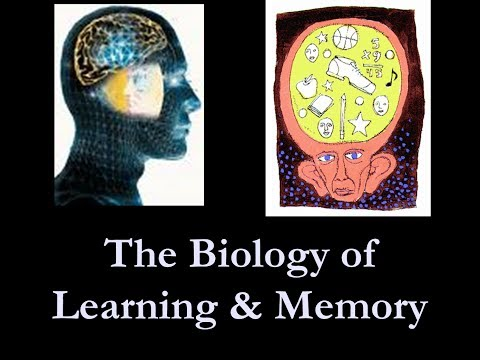 The Types Of Learning And Memory